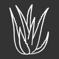 ícone de giz de aloe vera branco sobre fundo preto vetor