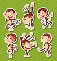 Conjunto de macacos vetor