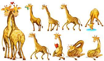 Posições diferentes de girafas vetor