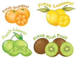 Conjunto de frutas cítricas vetor