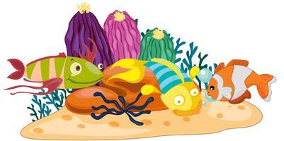 Peixe recife de coral