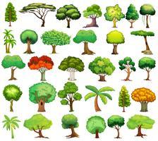Conjunto de árvores vetor