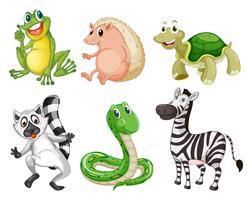 Diferentes espécies de animais vetor