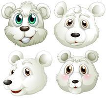 Cabeças de ursos polares vetor