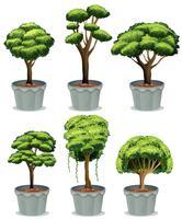 bonsai vetor