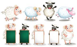 Conjunto de ovelhas vetor