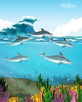 Golfinhos nadando no fundo do mar