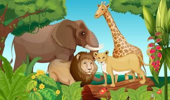 Animais na selva vetor