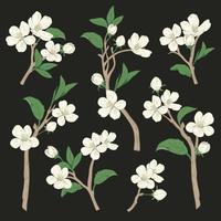 Árvore de florescência. Definir coleção. Entregue ramos brancos botânicos tirados da flor no fundo preto. Ilustração vetorial