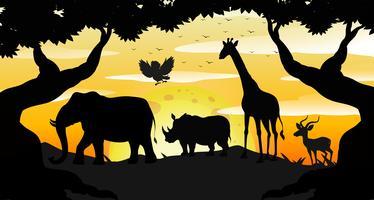 Cena de Safari silhueta ao amanhecer vetor