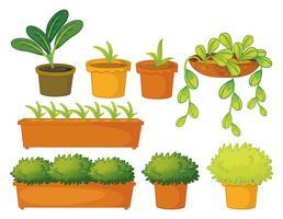 Várias plantas e vasos vetor