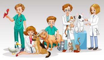 Uma equipe de médico veterinário em fundo branco vetor