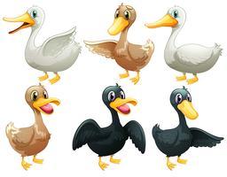 Patos e gansos vetor