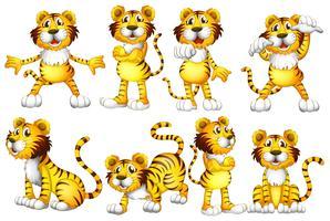 Conjunto de tigre vetor