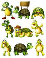 Ações de tartaruga vetor