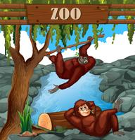 Macaco no zoológico vetor