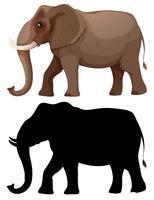 Conjunto de caracteres de elefante vetor