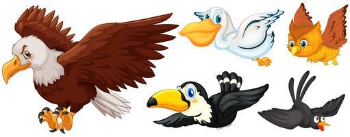 Diferentes tipos de pássaros voando vetor
