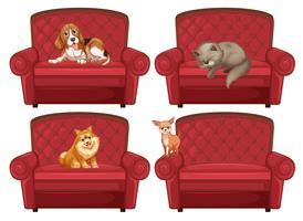Pet no sofá vetor