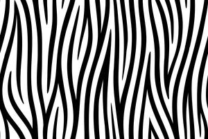 Fundo sem emenda da pele da zebra na arte gráfica de vetor. vetor