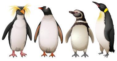 Pinguins vetor