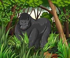 Gorila vivendo na selva vetor