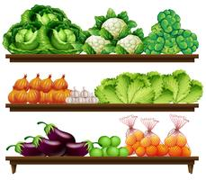 Grupo de vegetais na prateleira vetor
