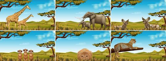 Conjunto de animais selvagens na savana