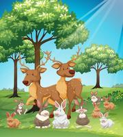Veados e coelhos no campo