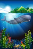 Baleia nadando sob o oceano vetor