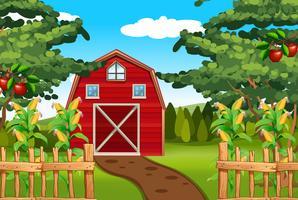 Milho e maçãs na fazenda vetor