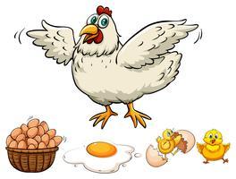 Frango e ovos na cesta vetor