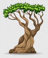 Grande árvore no fundo transparente vetor