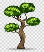 Árvore dos bonsais no fundo transparente vetor