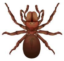 Aranha australiana do funil vetor