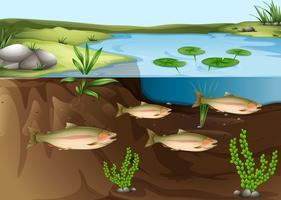 Um ecossistema sob a lagoa vetor
