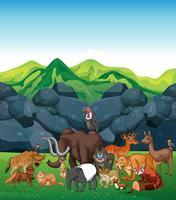 Animais selvagens no campo vetor