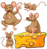 Fatia marrom do rato e do queijo vetor