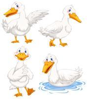 Quatro patos em poses diferentes vetor