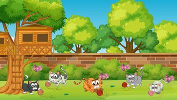 Cinco gatinhos brincando no jardim