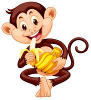 Macaquinho comendo banana vetor