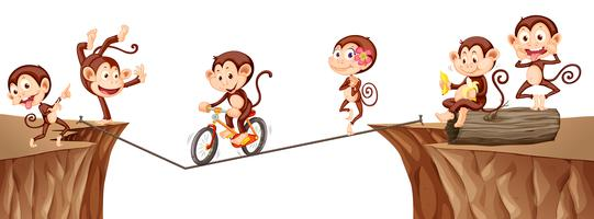Macacos brincando na corda vetor