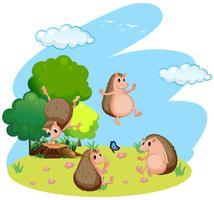 Quatro ouriço no campo