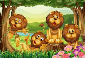Leão que vive na selva vetor