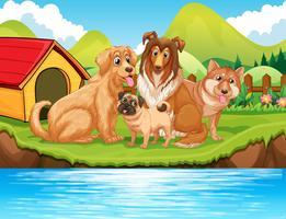 Cães sentados à beira do rio