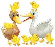 Família de patos com pequenos patinhos vetor