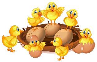 Muitos filhotes e ovos no ninho vetor