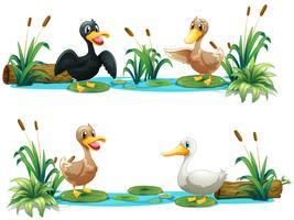 Patos, vivendo, em, a, lagoa vetor