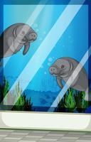 Seacows nadando sob o mar vetor