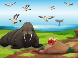 Animais e oceano vetor